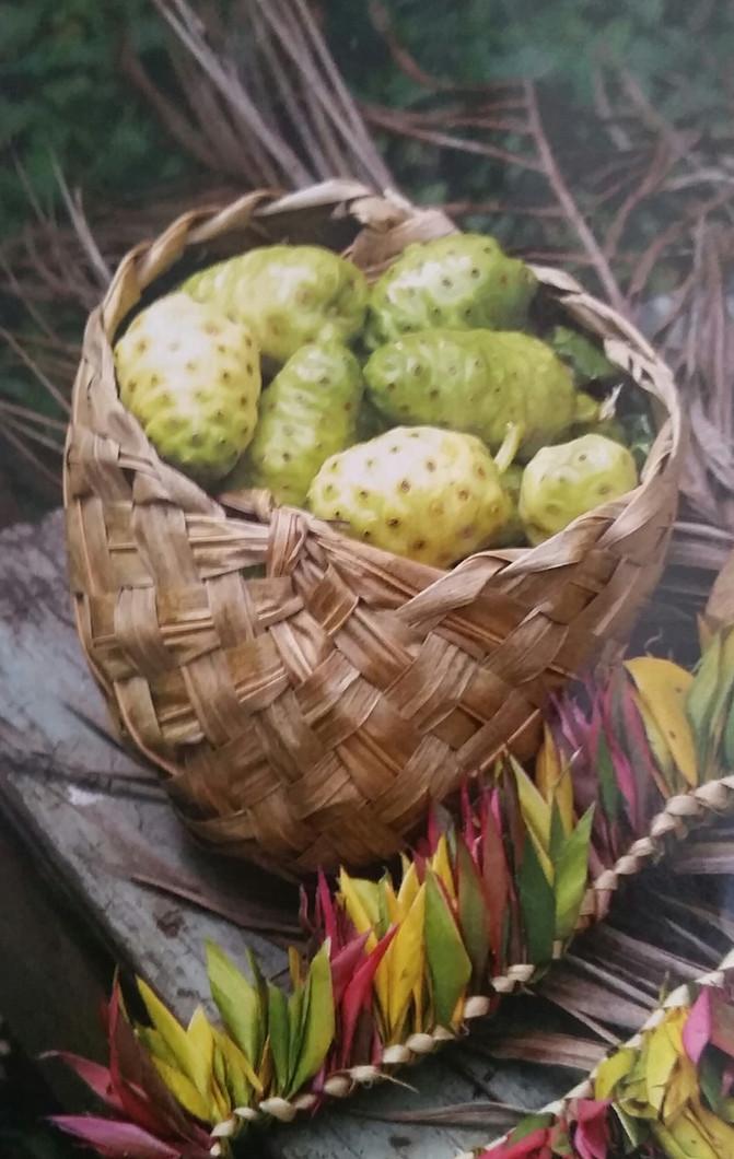ELEMENTS OF NONI: THE NONI FRUIT