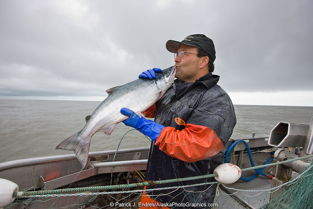 Passionate about Copper River Sockeye Salmon