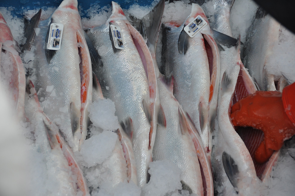 Paradigm Seafoods strict quality specifications begin with Ice
