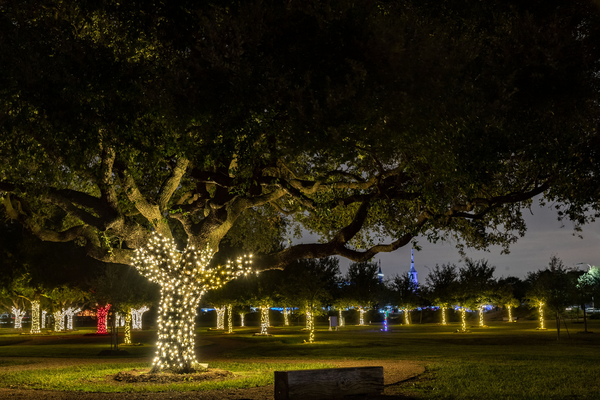 """The Astronaut Memorial Tree Grove at Johnson Space Center is decorated with lights every year for the holiday season. Alan Bean said during Pete Conrad's memorial service, """"Pete wants his tree to be special—the most colorful tree—because his motto is, 'When you can't be good, be colorful.'"""" After which Pete Conrad's tree was always decorated in red lights. Alan Bean's tree is new this year, 2019, and can be seen decorated in colored lights."""