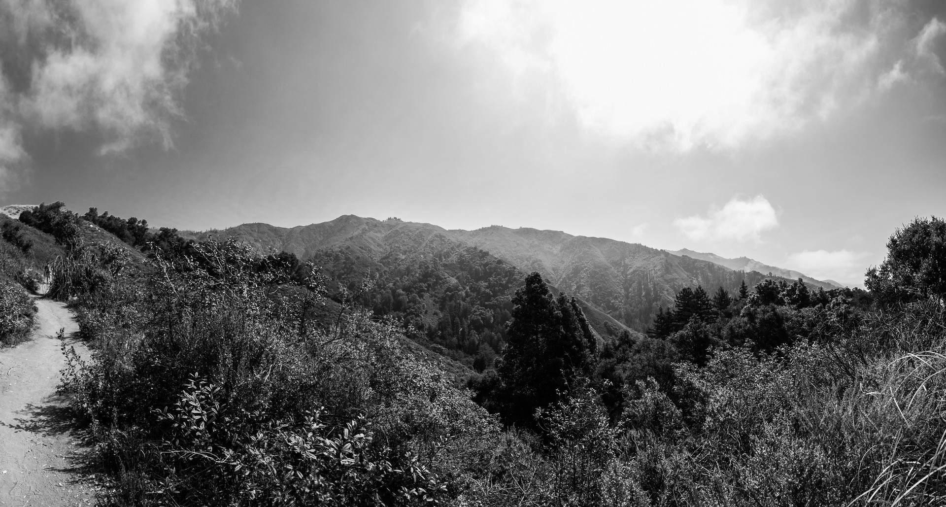 Black and white image from Pfeiffer Big Sur State Park
