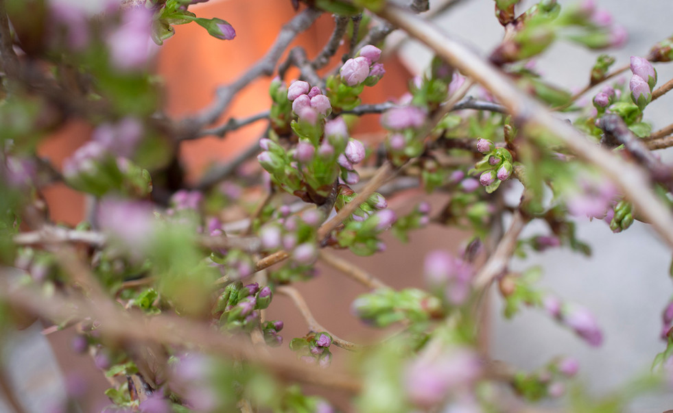 "2018.4 Milano Salone "" Slow Flower Life -Shaping Beauty- """