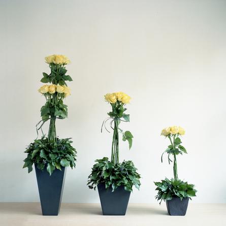 Flower Gift Design