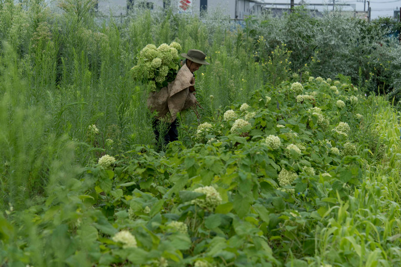 Bringing appreciation to local, sustainable flower harvesting practices.
