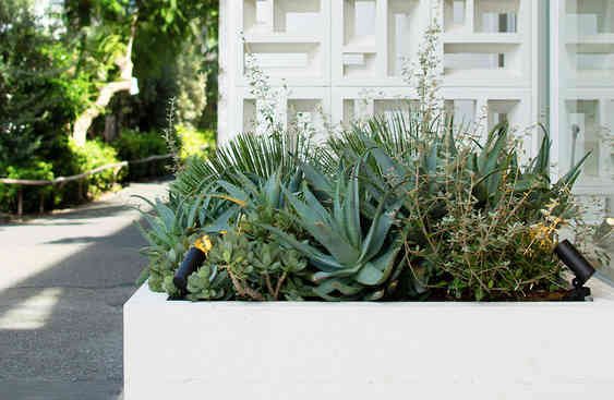 Space Design: Outer landscape designs reflect the foliage inside, and mimic a house's garden.