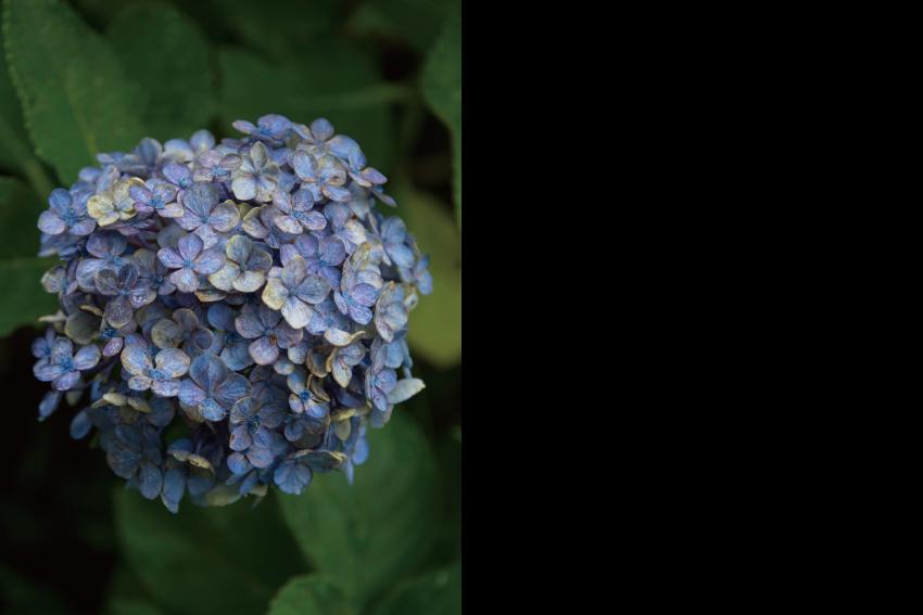 2017-18 Slow Flower Life