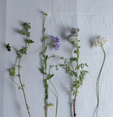 Examples of local flowers.