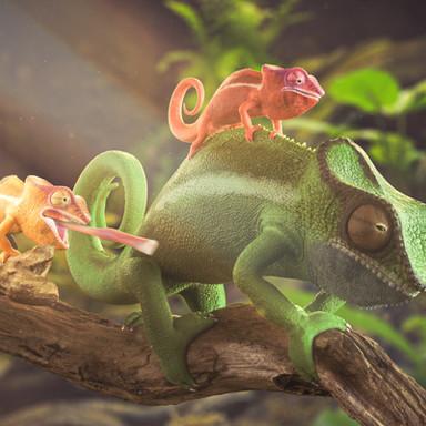 Kameleon Redband