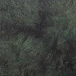 Lawn, 2013