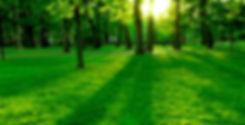 EnvironmentBG1.jpg
