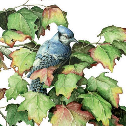Autumn Maple - Bluejay