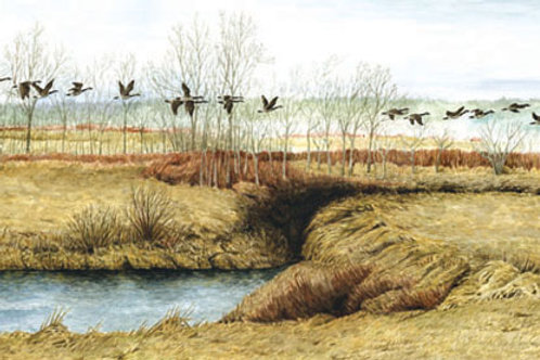 Geese Over The Tantramar