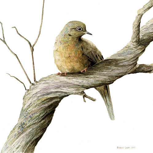 Mourning Dove & Lilac