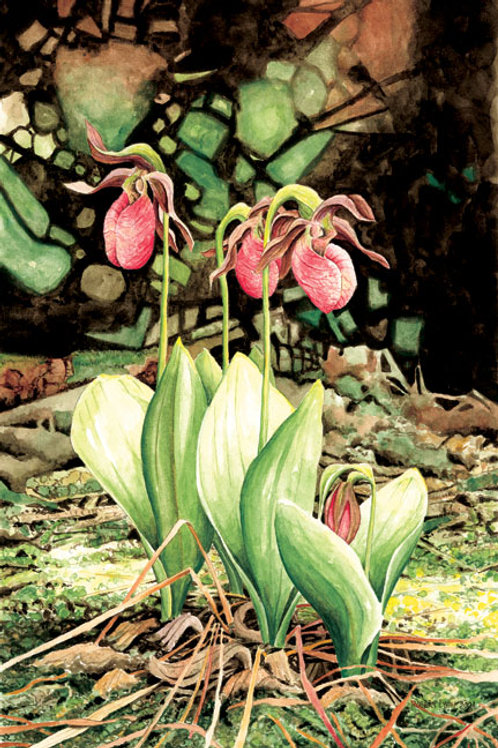 Pink Ladyslippers