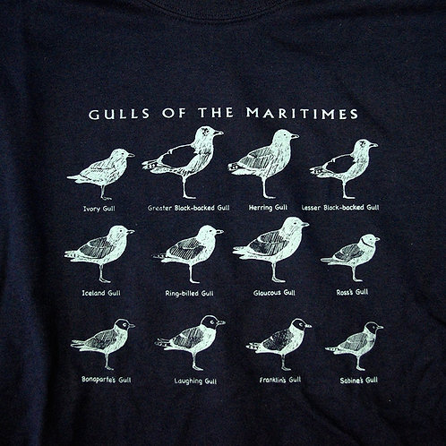 Gulls of the Maritimes