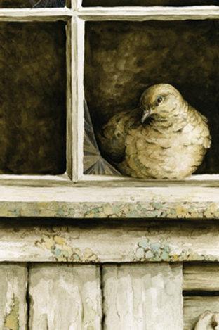 Mourning Dove & Barn