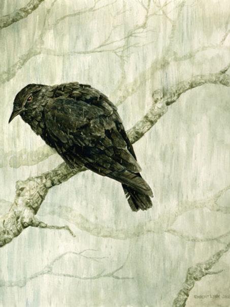 Crow in the Rain
