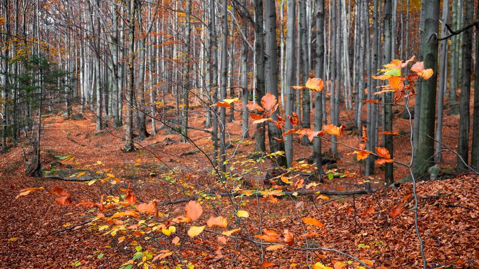 pozimní lesy okolo Smědé, Jizerské hory.