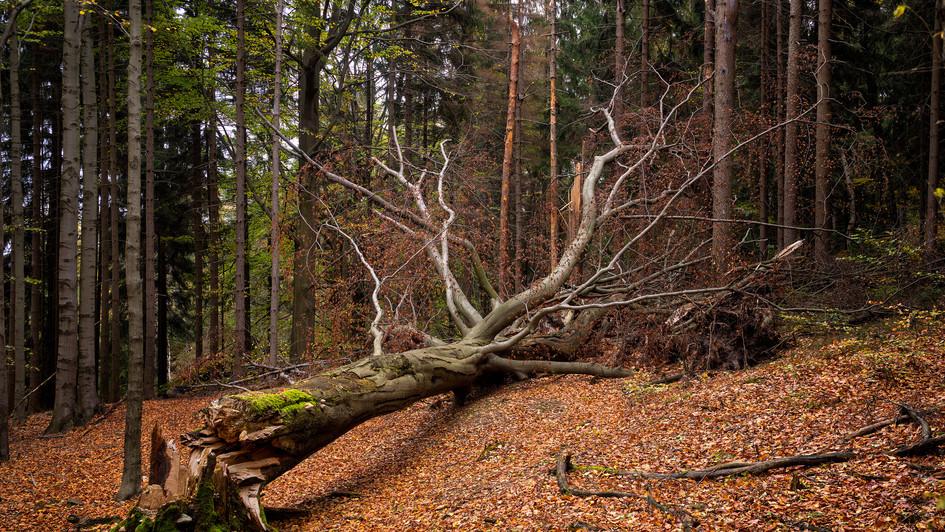 lesy u Grober Winterberg, Sasko.jpg
