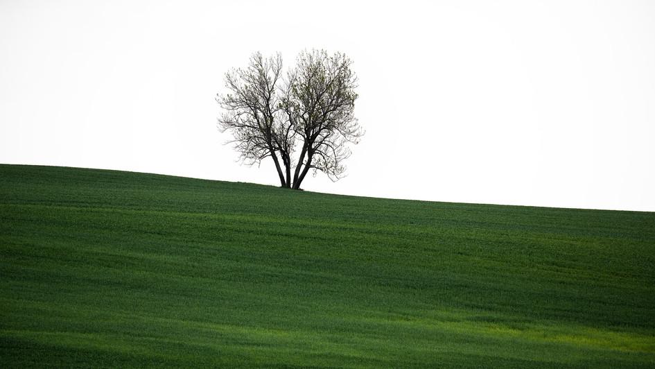 Vřesovice, strom v polích