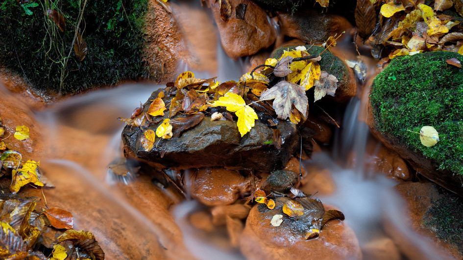 Labská rokle - železitý potok.jpg