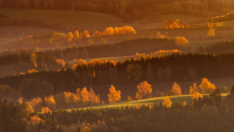 stromy a louky při východu slunce z rozh