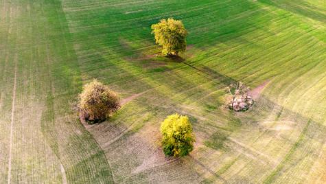 Svatobořice-Misřín pole a  podzimní stromy z dronu