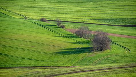 Svatobořice-Misřín, jarní pole