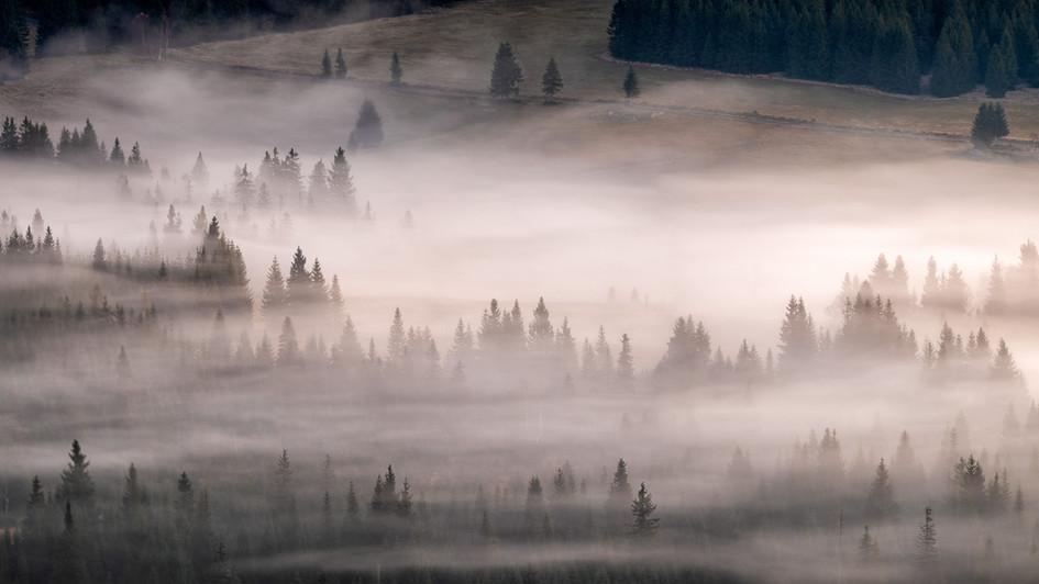 ranní mlhy v lesích z Pytláckých kamenů,