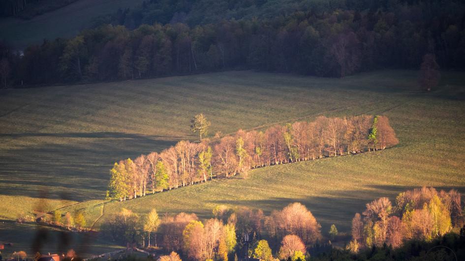 stromořadí u Bílého potoka, pohled z Pal