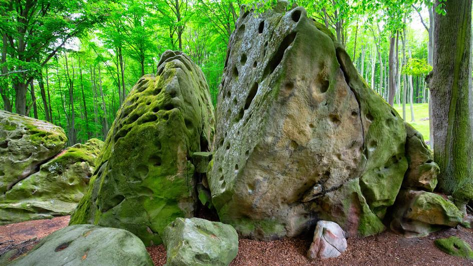 Osvětimany, kameny v lesích, jaro