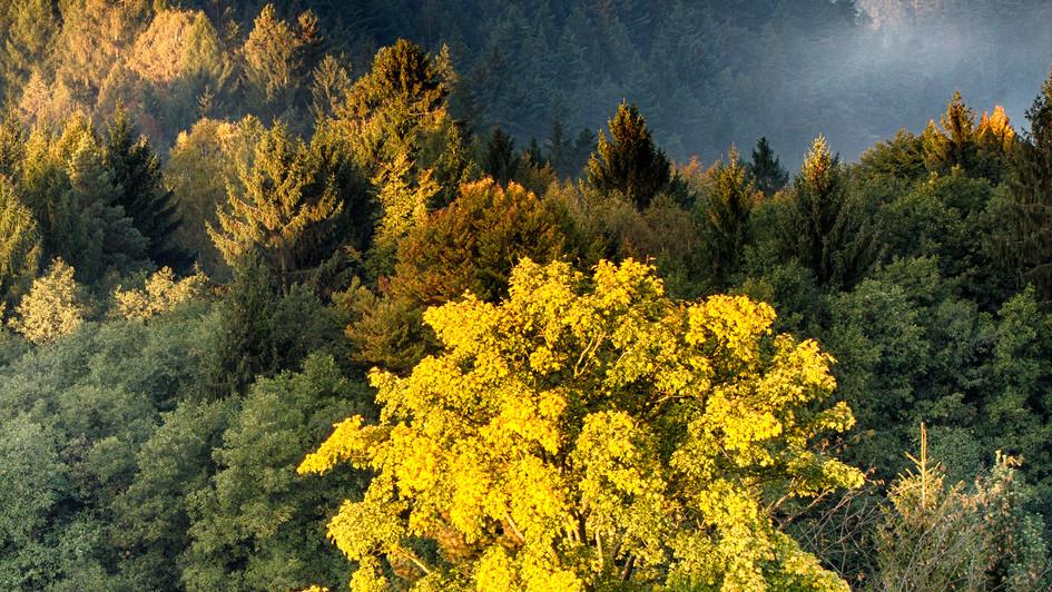 Křížový vrch, Rýnartice, svítání a mlhy.jp