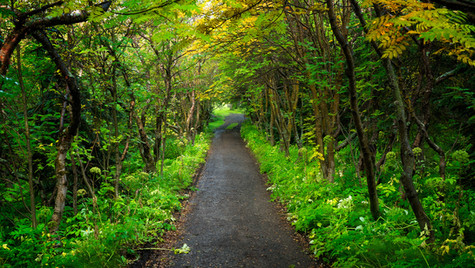 lesík u Höfði, oblast Mývatn