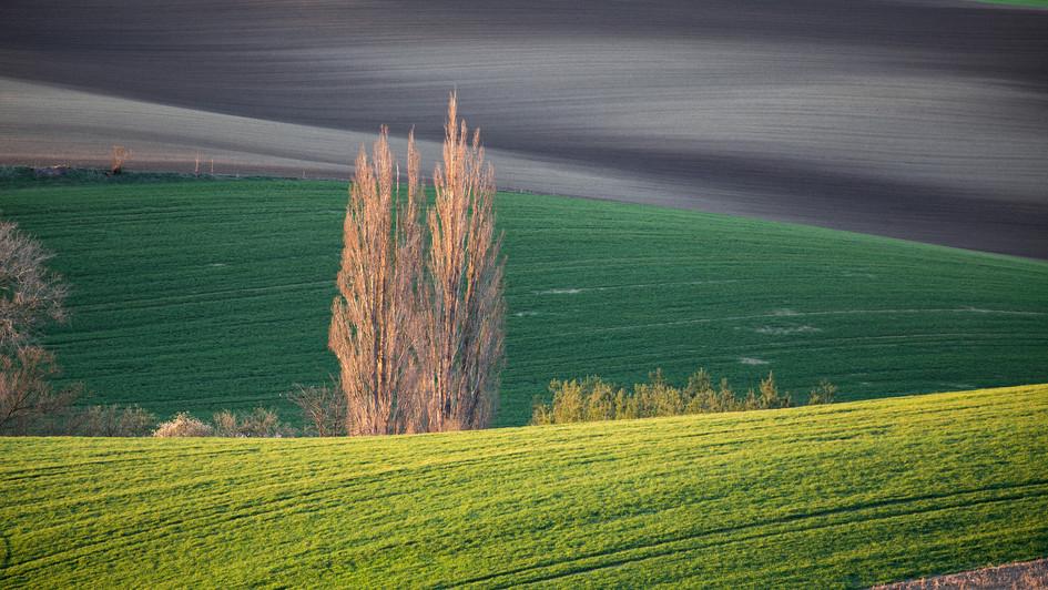 Nad Šardicemi, pole, západ