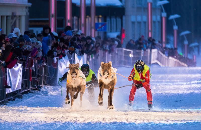 Rovaniemi Reindeer Sprint Race. Foto: markotapio.deviantart.com