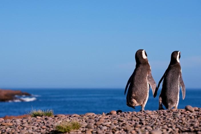 Puerto Madryn / Foto: Pura vida viajes