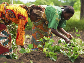 The Potential Growth Of Agriculture And Agribusiness In Africa
