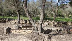 אדריכל בהרי ירושלים, נוף עצי זית