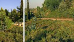 אדריכל נוף לגינה ציבורית, ראש העין