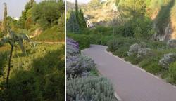 אדריכל לגינה ציבורית, צמחיה מקומית