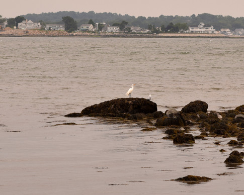 As if to say 'thank you,' an egret perched on the rocks to watch Indy-Anna walk away.