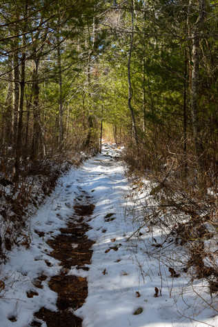 freetown state forest-8.jpg