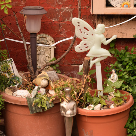 Fairy in a Potted Plant