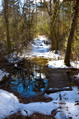 freetown state forest-6.jpg