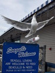 The boardwalk was seabird-friendly.