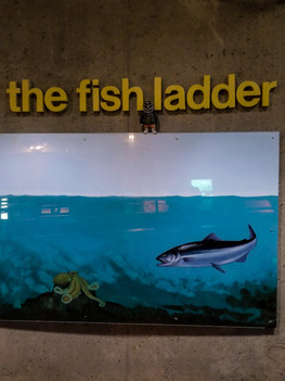 fish ladder-10.jpg