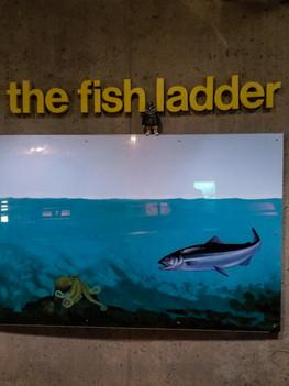 fish ladder-10.jpg