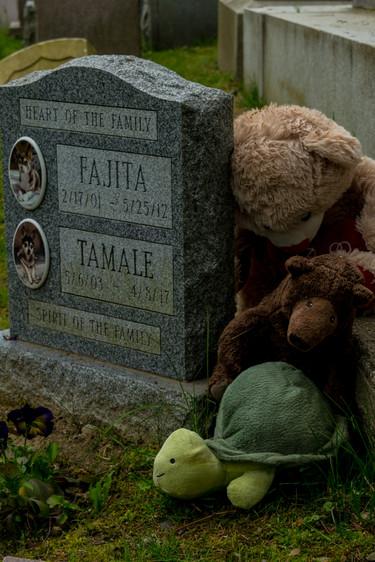 hartsdale pet cemetery-4.jpg