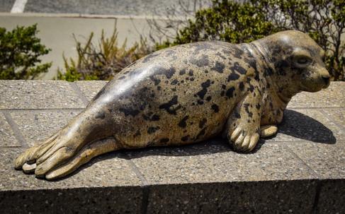 marine mammal center-11.jpg