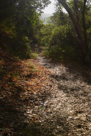 willow creek-13.jpg